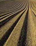 Global Inorganic Fertilizer Market, 2024