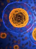 Bio Imaging Market 2024