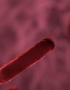 Blood Cancer Molecular Diagnostics Market