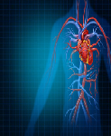cardiovascular devices market size